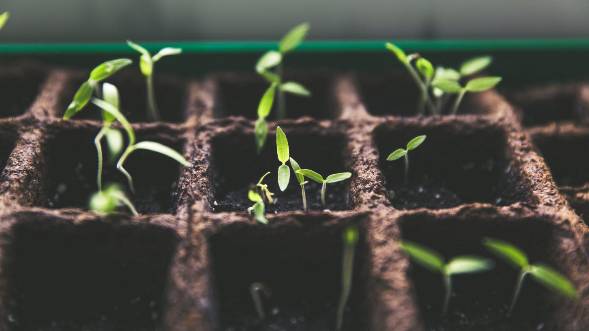National Church Planting Process